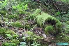 nature balade blogueuse naturelle