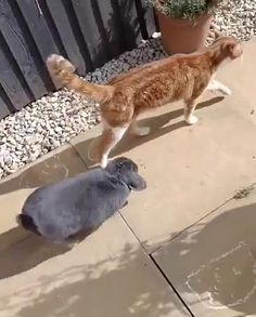 Cute Funny Animals, Cute Baby Animals, Funny Cute, Animals And Pets, Cute Cats, Cute Animal Videos, Cute Animal Pictures, Cute Creatures, Crazy Cats
