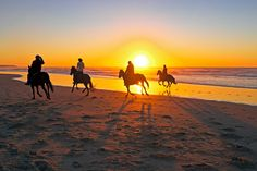 Horseback riding AND the beach? Sunset beach has a fun place that offers horseback riding lessons! Beach Horseback Riding, Horseback Riding Lessons, Sunset Beach Nc, California Lighthouse, Pirate Cruise, Colombia South America, Kayak Adventures, North Myrtle Beach, Am Meer