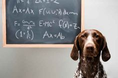 This good will hunting-dog   20 Animals That Are Smarter Than You