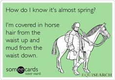 How do I know it's almost spring? #Equestrian -- not quite there yet, but Teeka's starting to shed!