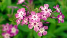 Environmentally conscious gardeners in the Southeast should use these 10 native plant alternatives instead of exotic introductions.