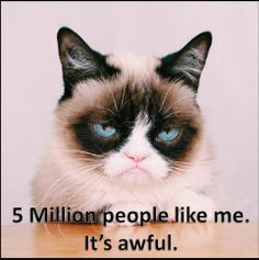 5 million followers on Facebook today :D Tard is predictably thrilled hehe