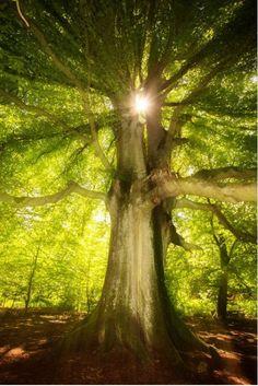 Amazing Trees from $34.99 | www.wallartprints.com.au #TreePhotography #NaturePhotography