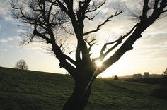 Tree, sunset, Sunny Hill Park, Hendon, London NW4, 10th Dec 2014