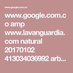 www.google.com.co amp www.lavanguardia.com natural 20170102 413034036992 arbol-kiri-cambio-climatico.html%3ffacet=amp