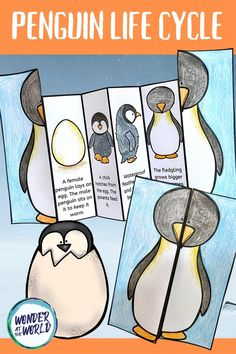 A fun folding activity all about the life cycle of a penguin. This resource has 3 similar templates to choose from. Use for a life cycles, habitats, penguins, birds or Anarctic lesson or as a science center. School Age Activities, Preschool Learning Activities, Teaching Kids, Kids Learning, Preschool Crafts, Bird Life Cycle, Penguin Life, Learning English For Kids, Art Drawings For Kids