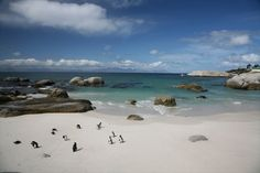 Boulders Beach, South Africa-- Been here.... Favorite place on Earth <3