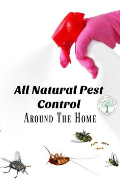 Natural pest control options are not only less expensive than store bought pesticides, they are safer for your family and pets! Get some great ideas here! The Homesteading Hippy