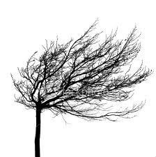 Wind-blown tree silhouette-love this