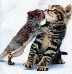 Baby Squirrel kissing a kitten. I don't think I've ever seen anything so cute