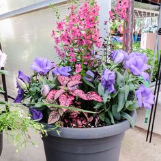 Pink & purple patio pot! #Glasshouse #Chatham - Visit http://www.glasshousenursery.ca