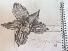 """""""Orchid sketch, 16.7.14"""" by Vishwani Chauhan, pencil on paper."""