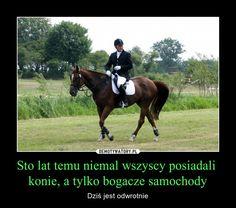 Sto lat temu niemal wszyscy posiadali konie, a tylko bogacze samochody – Dziś jest odwrotnie Rider Quotes, Equestrian Quotes, Very Funny Memes, Funny Mems, Happy Photos, Save Life, Horse Riding, Sad Quotes, Best Memes
