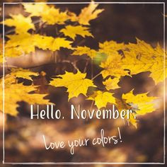 November quote on image of autumn landscape. Hallo November, Welcome November, Hello December, Sweet November, November Calendar, November Month, New Month, November Backgrounds, November Wallpaper