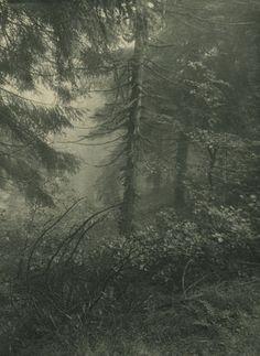 Josef Sudek - 70 Artworks, Bio & Shows on Artsy Fine Art Photography, Amazing Photography, Landscape Photography, Nature Photography, Josef Sudek, Dark Green Aesthetic, The Mountains Are Calling, John Muir, Global Art