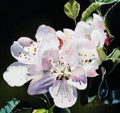 Jacqueline Gnott ~ Apple Blossom -- watercolor