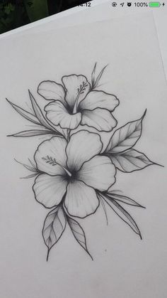 Hibiscus flower _ / / _ Illustration _ Drawing _ Flower print _ Wall decoration… – Flower Tattoo Designs Flower Tattoo Designs – flower tattoos – flower tattoos – Tattoo World Easy Flower Drawings, Pencil Drawings Of Flowers, Flower Sketches, Cool Art Drawings, Pencil Art Drawings, Art Drawings Sketches, Drawing Ideas, Drawing Flowers, Flower Design Drawing