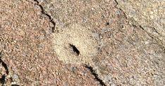 Mieren kunnen geen kwaad en zijn nuttig omdat ze dode insecten e.d. opruimen. Mieren laten zich makkelijk verjagen, verdelgen is niet nodig...
