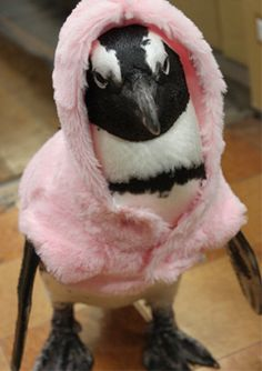 OMG! OMG OMG! two of my most fave things in the world! Penguins and PINK!!!! the onlyi thing missing is glitter