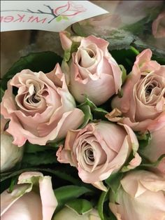 Rose 'Menta'...soft nude pink. Sold in bunches of 10 stems from the Flowermonger the wholesale floral home delivery service.