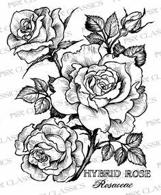 Hybrid Rose Botanical - PSX Design Classics on www.addictedtorubberstamps.com