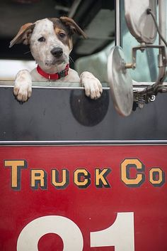 Meet Pouch the Dog   Photo Gallery   Chicago Fire   NBC