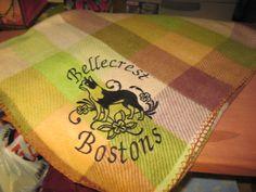 Fancy Boston Terrier