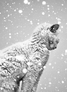 Chat sous la neige // French cat under the snow.