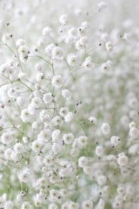Baby's Breath... so much prettier in mass like this, than poked in as filler in a bouquet.