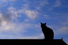 Cat Reference, The Oc, Cat Art, Persona, Avatar, Photo Ideas, Cute Animals, Silhouette, Cats