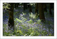 Derreen wood by liveforphotos, via Flickr