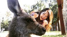 Selfie #australia  #goldcoast  #currumbinwildlifesanctuary  #kangaroo #カンガルー触れた #セルフィーできた #ふっさふさ #めっちゃムキムキのいた #寝方がおっさん #こんなかわいい顔して #足の踏み場ないくらいうんこしてる by salygoo http://ift.tt/1X9mXhV
