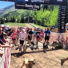 outdoor exercise for dogs | Faces of the Dogs of the GoPro Mountain Games