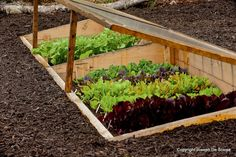 Learn how to grow vegetables all year long ... even in winter.