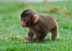 Baby monkey, baby monkey