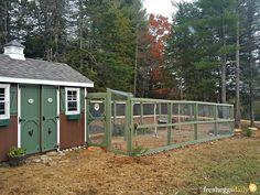 Building a Predator-Proof Chicken Run | Fresh Eggs Daily®
