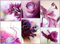 Цветовые настроения (17 фото)