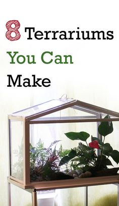 The Rainforest Garden: 8 Terrarium DIY Projects. Look for an aquarium at Goodwill and create one for the Discovery Center...a place to keep bugs found on the playground for a week of observation? Be sure to stock DC with bug keepers from Dollar Store...allow students to take out during recess if they choose.