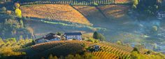 Rural houses and autumnal vineyards in Piedmont, Italy. Rural House, City Photo, Vineyard, Piedmont Italy, Autumnal, Houses, Painting, Homes, Farmhouse