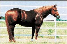 Grays Starlight by Peppy San Badger, a household name in the working cow horse industry.