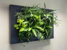 Mobilane UK are leading living wall and green roof design specialists, supplying beautiful indoor and outdoor green products throughout the UK. Tropical Garden Design, Vertical Garden Design, Wood Wall Design, Small Galley Kitchens, Girl Cave, Live Picture, Indoor Flowers, Home Landscaping, Plant Pictures