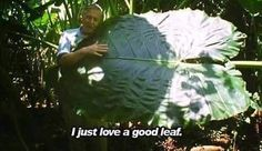 David Attenborough Loves Botany ( I also love David Attenborough and leaves) Aaliyah, Just Love, Just In Case, Flower Yellow, My Academia, Le Vent Se Leve, The Adventure Zone, Intp, Botany