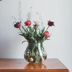 Projekt Blume (@projektblume) • Instagram photos and videos Glass Vase, Instagram, Videos, Home Decor, Projects, Flowers, Decoration Home, Room Decor, Home Interior Design