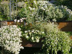 Weiße Pflanzen auf dem Balkon