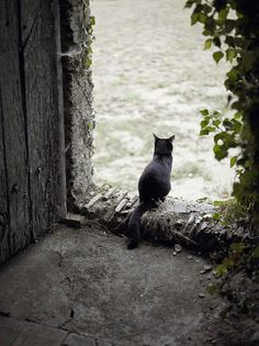 Black cat from Chateau de l'Epinay in Saint-Georges-sur-Loire, France. More cats of France at http://www.traveling-cats.com/search/label/France