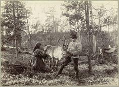 https://flic.kr/p/vq5BSB   Melking av reinsdyr / milking reindeer   Beskrivelse / Description: Originalen stammer fra et album eid av lektor og geolog Adolf Larsen Dal (1863-1948). Dato / Date: ca. 1890-1900 Sted / Place: Finnmark Fotograf / Photographer: Ellisif Wessel (1866-1949) Digital kopi av original  / Digital copy of original: s/h papirpositiv Eier / Owner Institution: Nasjonalbiblioteket / National Library of Norway Lenke / Link: www.nb.no Bildesignatur / Image Number: blds_07576