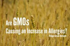 Are GMOs causing an increase in allergies / http://villagegreennetwork.com/gmos-causing-increase-allergies/