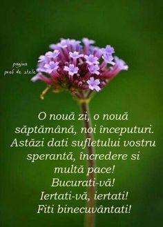Motto, Dandelion, Croissant, Quotes, Plants, Gift, Biblia, Qoutes, Dandelions
