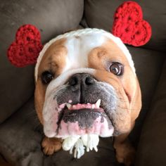 ❤ Bacon is ready for Valentines Day! ❤ Posted on Baggy Bulldogs